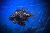 Underwater Landscape with Fishes in oceanarium — Stock Photo