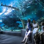 Family in oceanarium Bangkok — Stock Photo #50206909