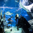 THAILAND BANGHOK 2013 MARCH 29 scuba divers enjoy dive in bangkok aquarium and feed fish — Stock Photo #50212777