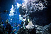 THAILAND BANGHOK 2013 MARCH 29 scuba divers enjoy dive in bangkok aquarium — Stock Photo
