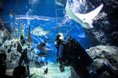THAILAND BANGHOK 2013 MARCH 29 scuba divers enjoy dive in bangkok aquarium and feed fish — Stock Photo