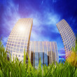 Grass and skyscrapers — Stock Photo