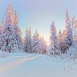 Winter landscape — Stock Photo #17855201