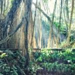 ������, ������: Jungle