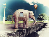 Elephant -house on the road — Stock Photo