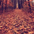 Autumn path across the wood, vintage — Stock Photo