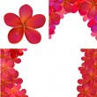 Pink Frangipani Set For Design — Stock Vector #12636882