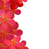 Pink Frangipani Frame — Stock Vector
