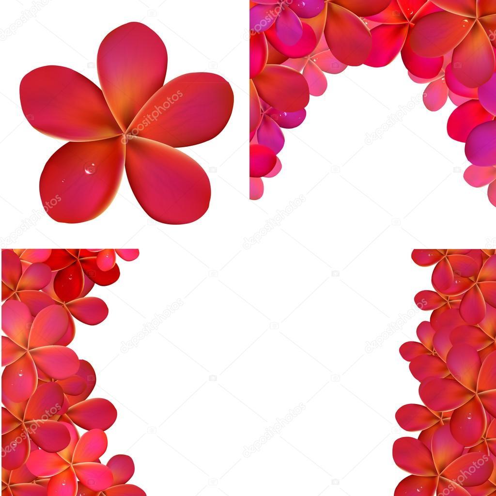 粉红色的鸡蛋花为设计, 矢量图设置 — 矢量图片作者 adamson