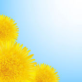 Flowers Dandelion Border — Stock Vector