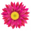 Stock Vector: Pink Gerbera