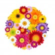 Colorful Gerbers Flowers Ball — Vector de stock