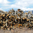 Log Stock Pile — Stock Photo