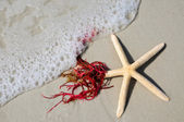 Starfish in the Surf — Stock Photo