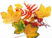 Autumn leaves — Stockfoto