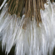 Dandelion,macro photo from the nature — Stock Photo