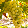 White grapes — Stock Photo #31089889