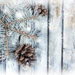 Рождественская елка с кедровых на деревянной доске — Стоковое фото