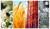 Four seasons: Spring, summer, autumn and winter — Stock Photo