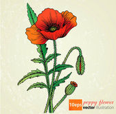 Poppy flowers vector — Stock Vector