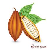 Cocoa bobs — Stock Vector