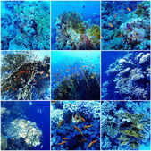 Underwater Sea Collage — Stock Photo