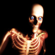 Skeleton — Stock Photo #12198088
