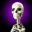 Close Up Of A Skull  — Stock Photo #17980949