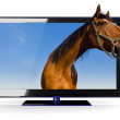 3D TV with a horse — Stock Photo