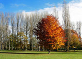 Autumn in Germany — Stock Photo