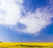 Wind und biologische energie — Stockfoto