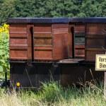 kovan — Stok fotoğraf