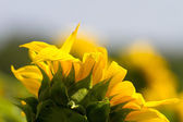 Sun into a Flower — Stock Photo