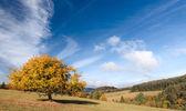 En el estado de ánimo otoño — Foto de Stock