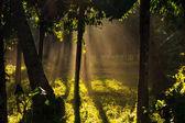 Palmtree forest by sunrise — Stock fotografie