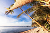 Palmtrees on the Beach — Stock Photo