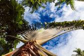 Naturaleza tropical — Foto de Stock