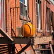 Halloween decoration — Stock fotografie
