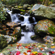 Waterfall in the smoky mountains — Stock Photo