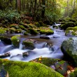 Slow moving stream in fall — Stock Photo