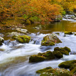 Stock Photo: Slow Moving Creek in Fall