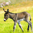Baby Burro — Stock Photo #14495757
