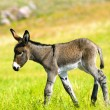 Royalty-Free Stock Photo: Baby Burro