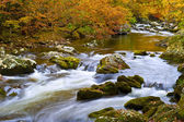 Slow Moving Creek in Fall — Stockfoto