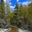 Dirt Road Through the Forest — Stock Photo