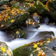 Creek in Fall — Stock Photo