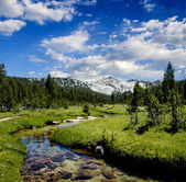 Meandering Creek in the Sierra Nevadas — Stock Photo