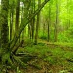 Great Smoky Mountain National Park — Stock Photo