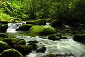 Parque Nacional grande smokey mountains — Fotografia Stock
