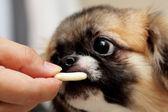 Hand voederen hond, foucs aan kant — Stockfoto